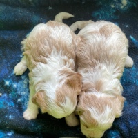 Kenzie Pups