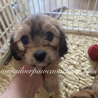 Maddie Puppy Selection