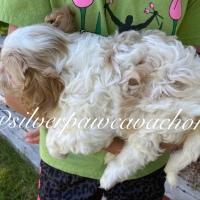 Dutchess & Jack Puppy Selection