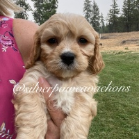 Four Available Puppies